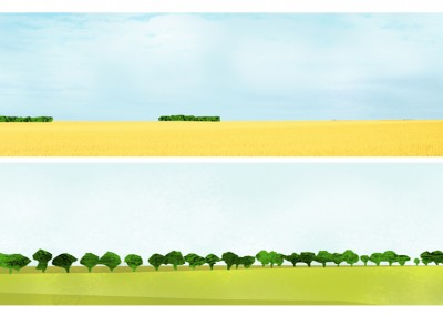l'arbre est quasi absent de ce paysage, les bosquets viennent rompre la monotonie et arrêtent le regard telles des îles
