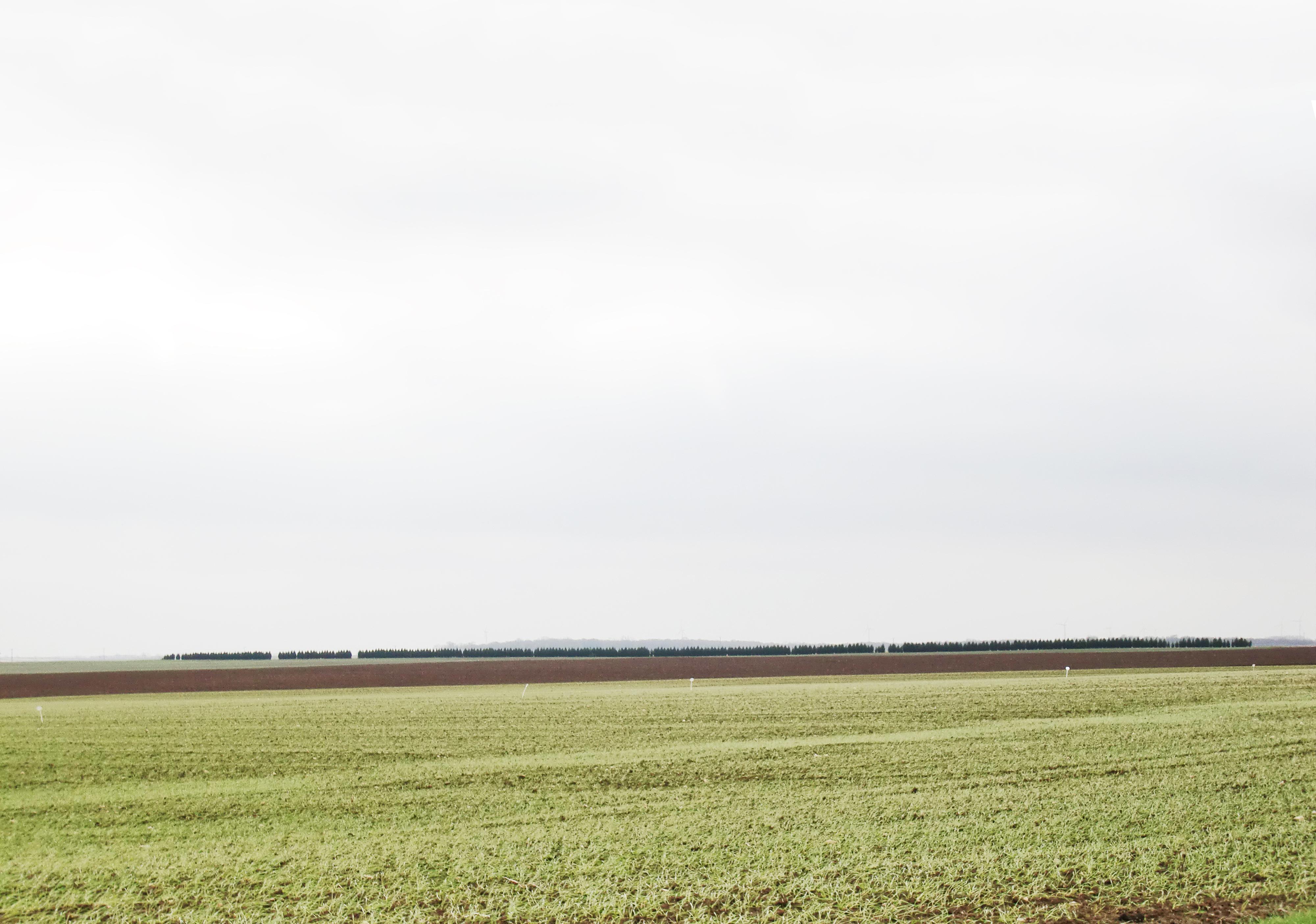 haie de thuyas plantée en Beauce pour répondre à la PAC // Si tous les goûts sont dans la nature, il est regrettable que tant de gens aient des goûts de même nature// André Dumont
